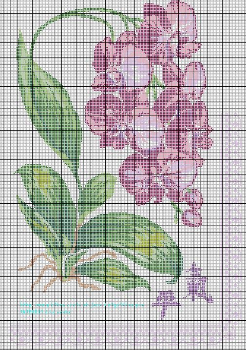 Grille gratuite broderie orchid e - Broderie point de croix grilles gratuites ...