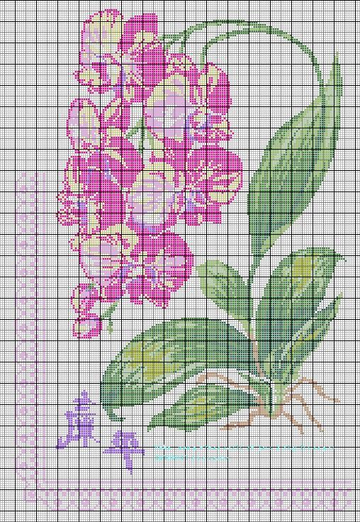 Grille gratuite broderie orchid e - Grille de broderie gratuite a imprimer ...