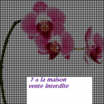 modèle broderie orchidee